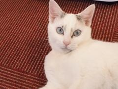猫カフェ3#2