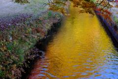 水面も紅葉。。。