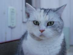 猫カフェ2#7(キリッ!)