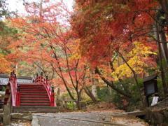 紅葉(今高野山)