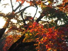 千光寺公園の紅葉5