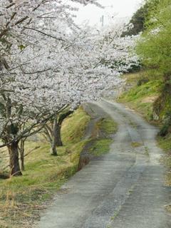 桜と田舎道