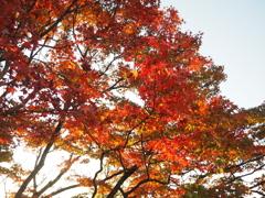 千光寺公園の紅葉6