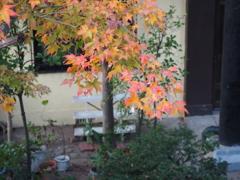 千光寺公園の紅葉4