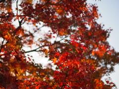 千光寺公園の紅葉2
