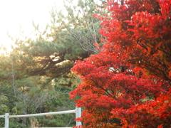 千光寺公園の紅葉7