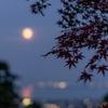 紅葉とお月様