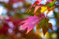 早くて短い秋
