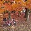紅葉と自転車