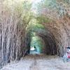 自転車 トンネル