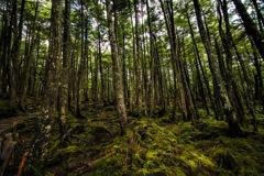 白駒池の苔林