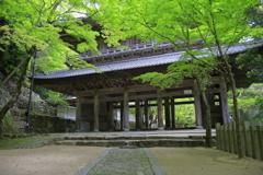 新緑の山門