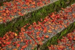 散りゆく秋の思い出