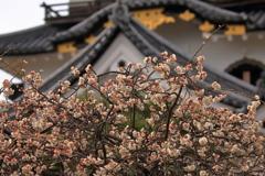 梅と破風飾り