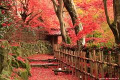 秋の隠れ里~赤の誘い