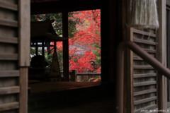 秋の隠れ里~本堂から
