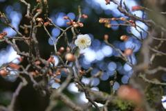一人、春を待つ②