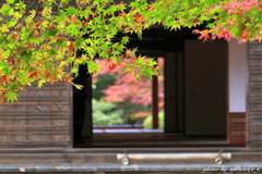 明壽院の秋~優柔不断