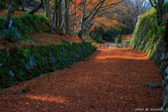 落ち葉の参道①