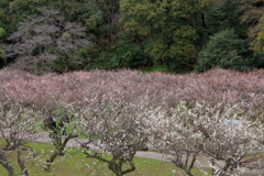Plum garden