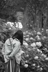 紫陽花の季節~想う
