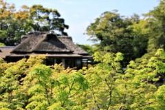 新緑の玄宮園2