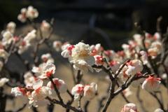 ざわめきだした春