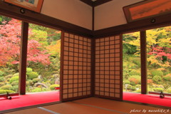 明壽院の秋~約束