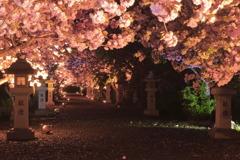 平成の花道