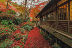 隠れ里の秋2020~敷き紅葉の小径