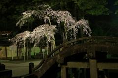 太閤橋と夜桜