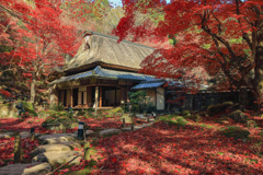 Temple of autumn leaves④~書院