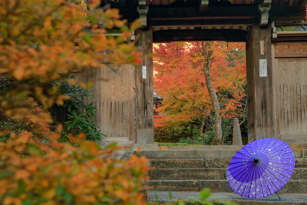 秋の近江孤篷庵