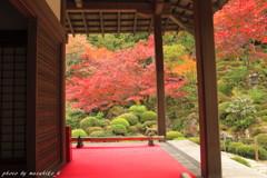 明壽院の秋~決断