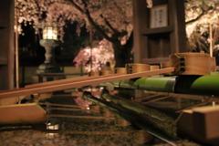 伊邪那美命に捧げる夜桜