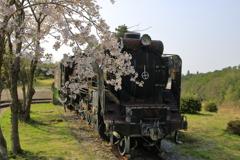 老兵は死なず、桜と共に。