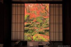 秋の隠れ里~赤い掛軸庭園