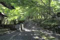 木漏れ日の参道~地上の楽園跡にて