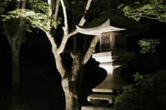 神あかり~燈籠と青紅葉~