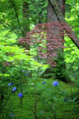 紅葉と紫陽花
