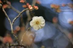 一人、春を待つ