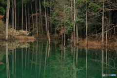妖精の森の名もなき貯水池