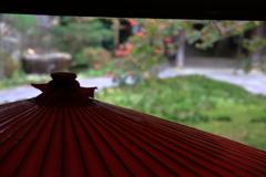 野点傘と百日紅
