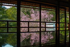 旧竹林院の春②~桜