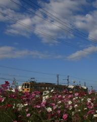 青空と秋桜とガチャコンと
