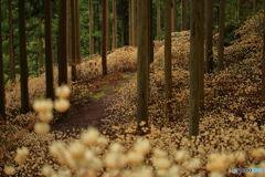 妖精の森の小径