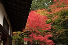 茶室前の紅葉