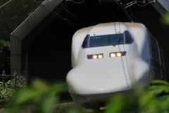 カモノハシ東京行