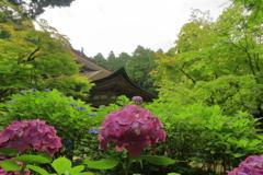 梅雨の山寺にて