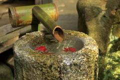 教林坊の手水鉢